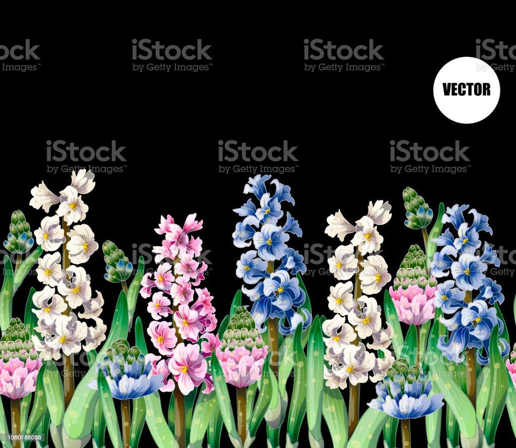 Border with hyacinths on dark background.Botanical vector. vector art illustration