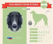 Borzoi Dog breed vector infographics.
