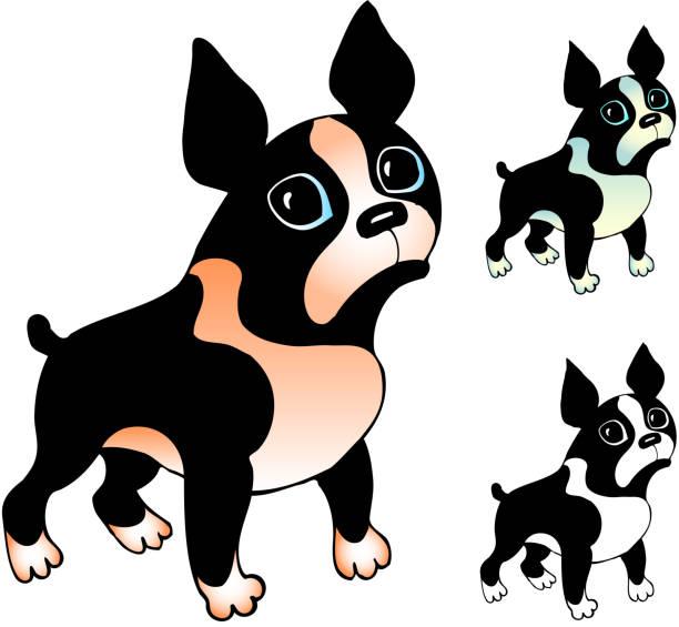 Boston terrier cartoon drawing vector art illustration