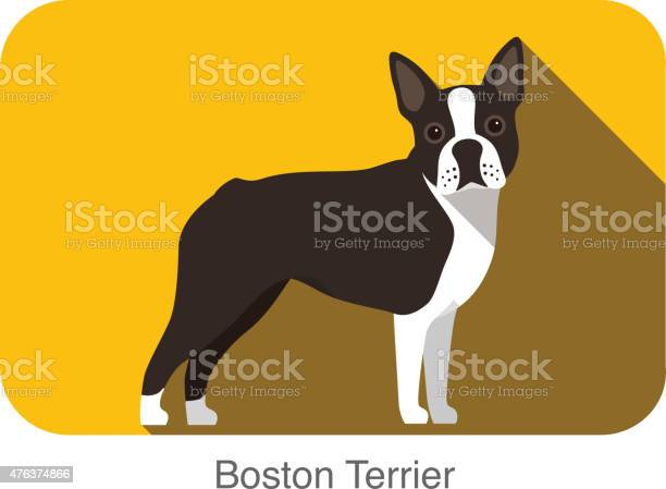 Boston terrier dog standing flat icon design vector id476374866?b=1&k=6&m=476374866&s=612x612&h=hmgbjeh0wdtthrtdbh pdcal6dt5ovaq6xmlibx1wcm=