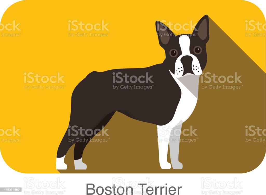 Boston Terrier, dog standing flat icon design vector art illustration
