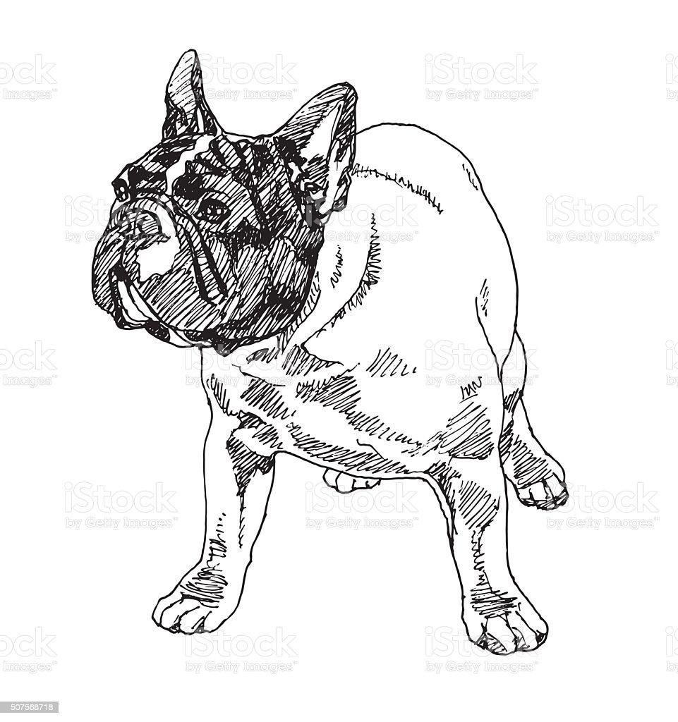 Boston Terrier Dog. Vector vector art illustration