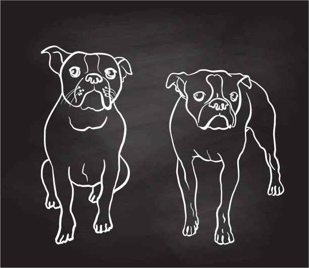 Boston Terrier Moods Chalkboard vector art illustration