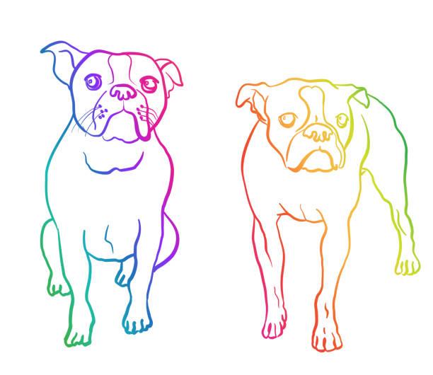 Boston Terrier Moods Rainbow vector art illustration