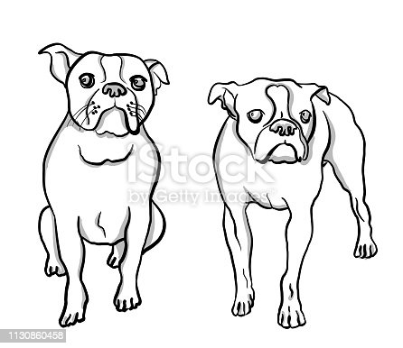 istock Boston Terrier Moods 1130860458