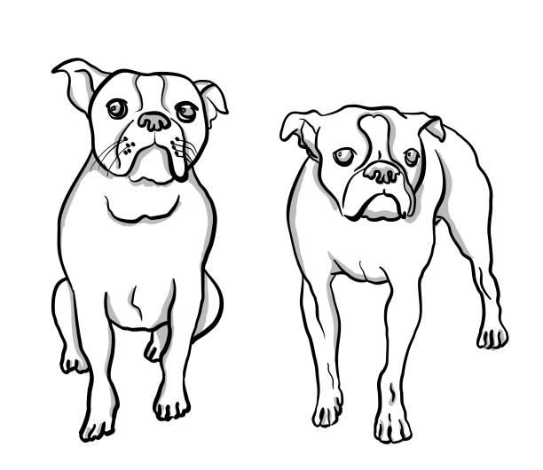 Boston Terrier Moods vector art illustration