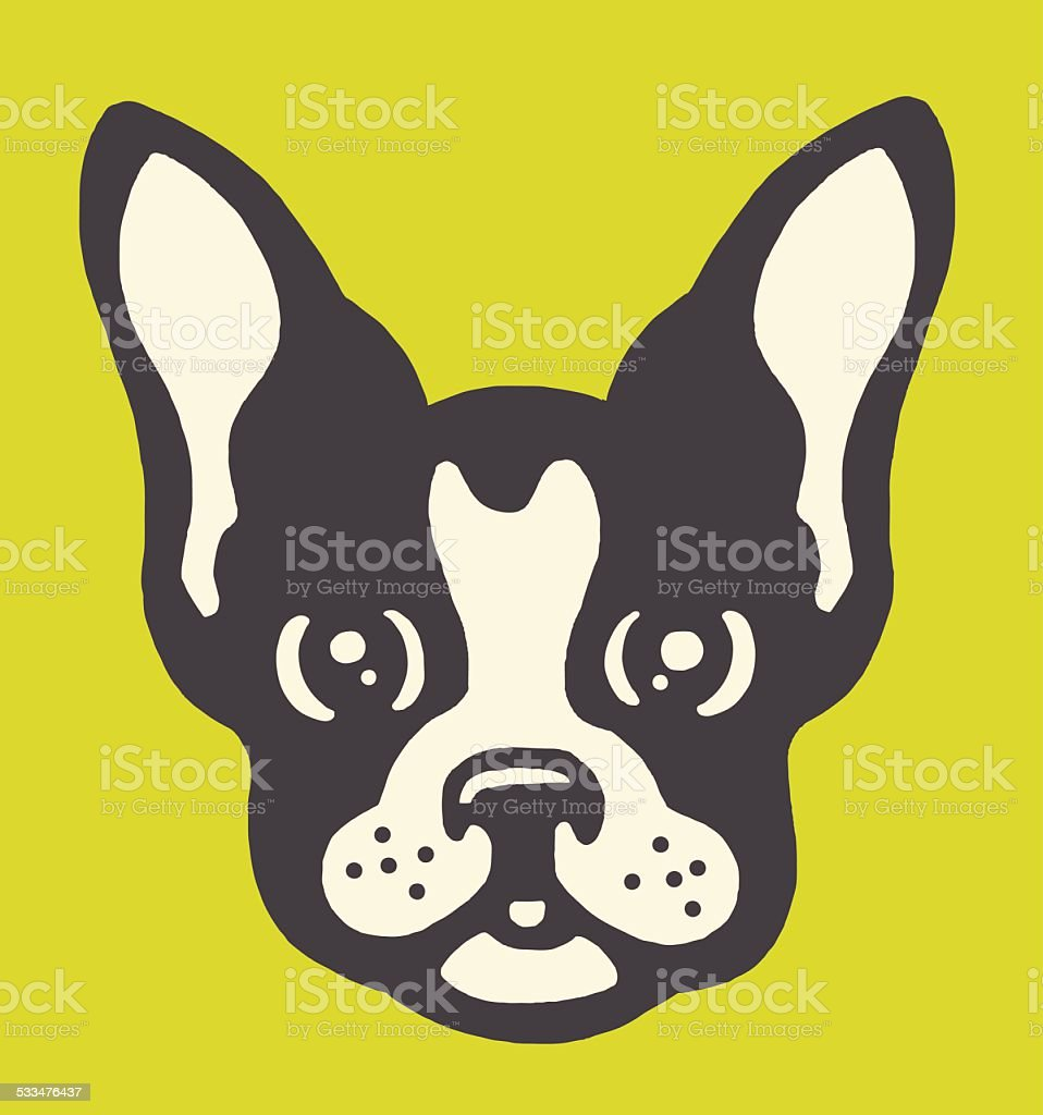 royalty free boston terrier clip art vector images illustrations rh istockphoto com boston terrier clip art for the 4th of july boston terrier clip art for the 4th of july
