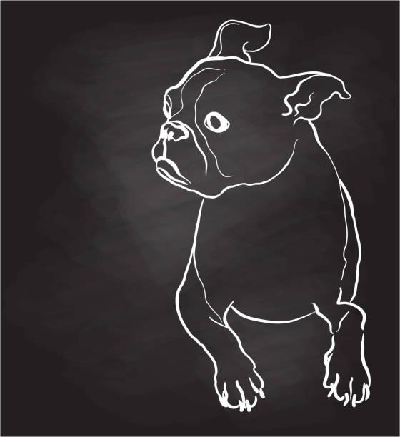 Boston Terrier Sketch Chalkboard vector art illustration