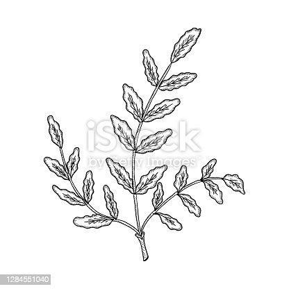 istock Boswellia mon 1284551040