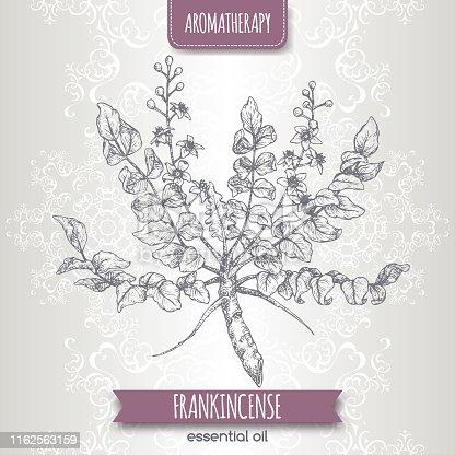 istock Boswellia sacra aka frankincense sketch on elegant lace background. 1162563159