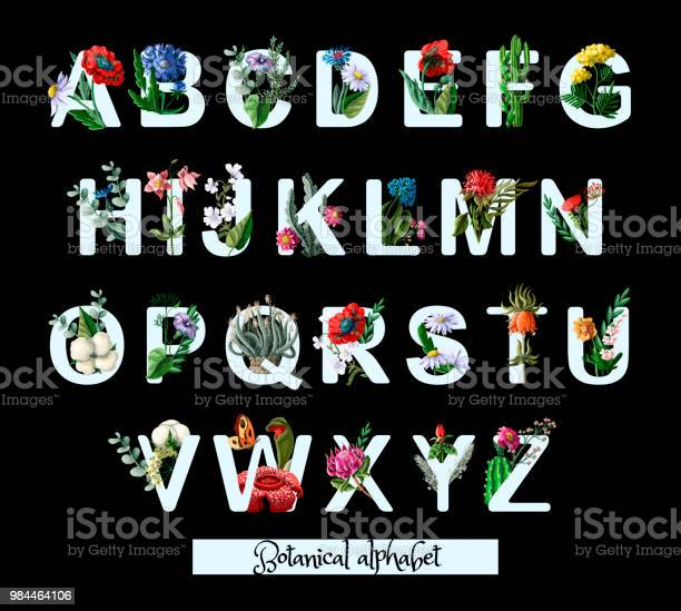 Botanical alphabet with wild and tropical flowers poppy chamomile and vector id984464106?b=1&k=6&m=984464106&s=612x612&h=q0hr61k2dmbe cx6aqjxi3emwhuw6l ujnqfjmbb vw=