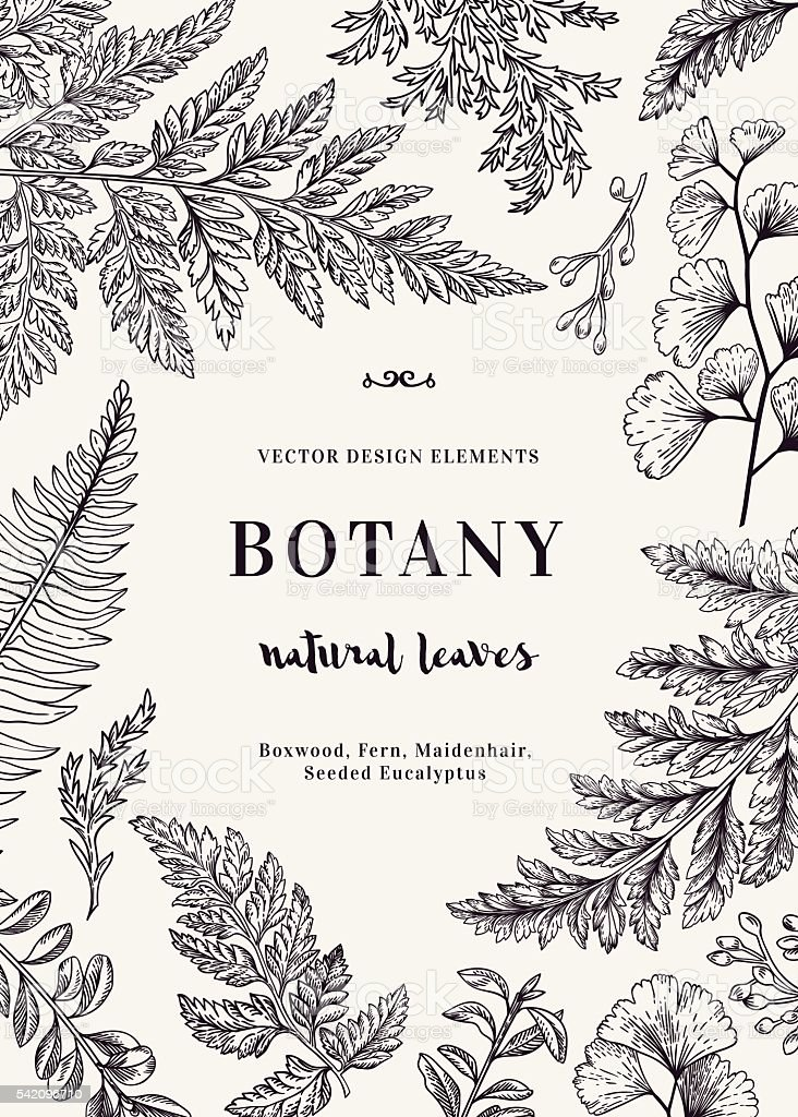 Botanical card for with leaves. vector art illustration