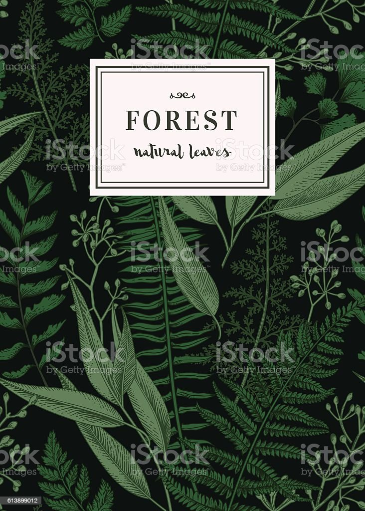 Botanical card in vintage style.