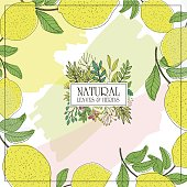 Botanical card with Herbs, fruits and flowers for design beauty products for care, individual products for the company, for designer tea packaging or organic food. Editable vector illustration