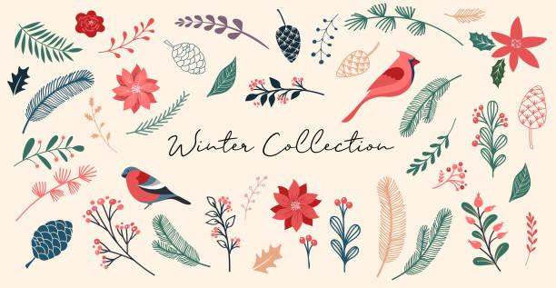 stockillustraties, clipart, cartoons en iconen met botanische kerst, xmas elementen, winter bloemen, bladeren, vogels en pinecones geïsoleerd op witte achtergronden. hand getekende vector illustratie - kerstster
