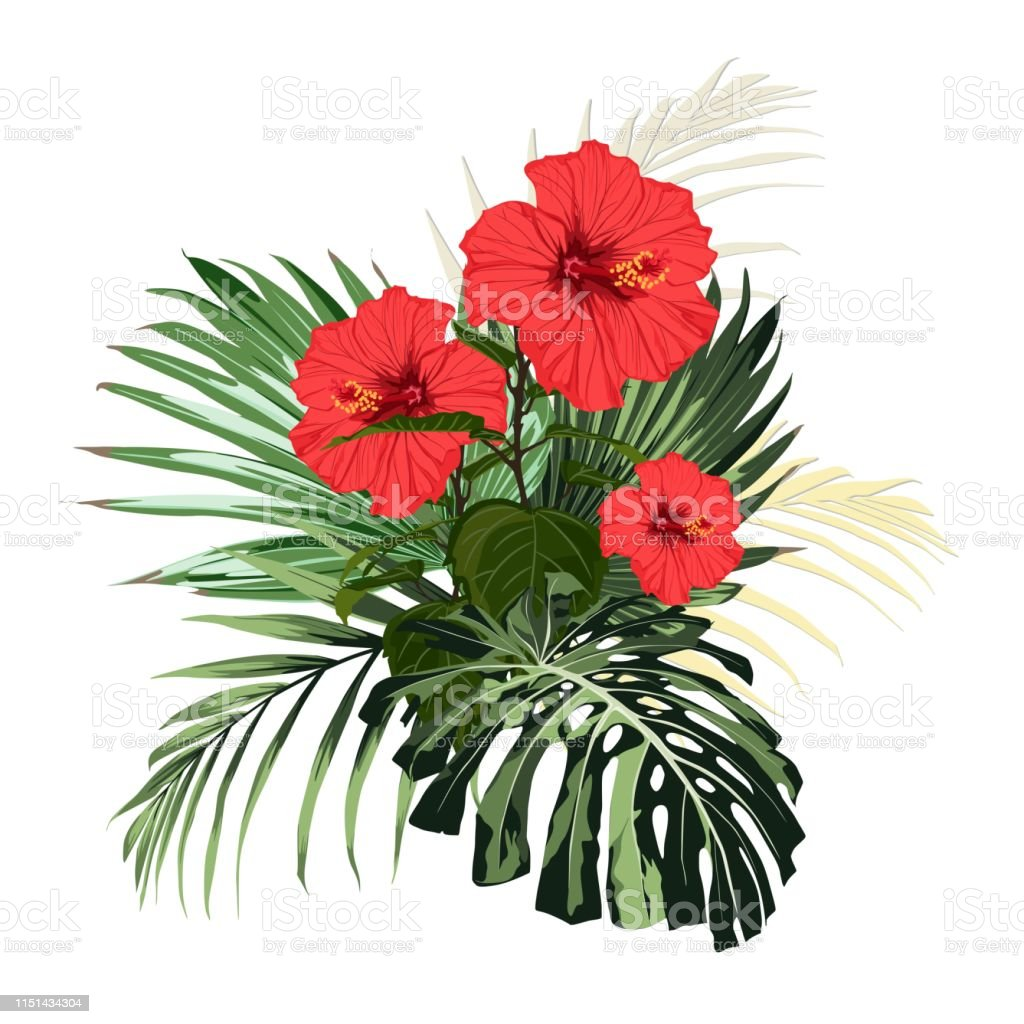 Botanical Illustration Beautiful Tropical Flowers Bouquet Red