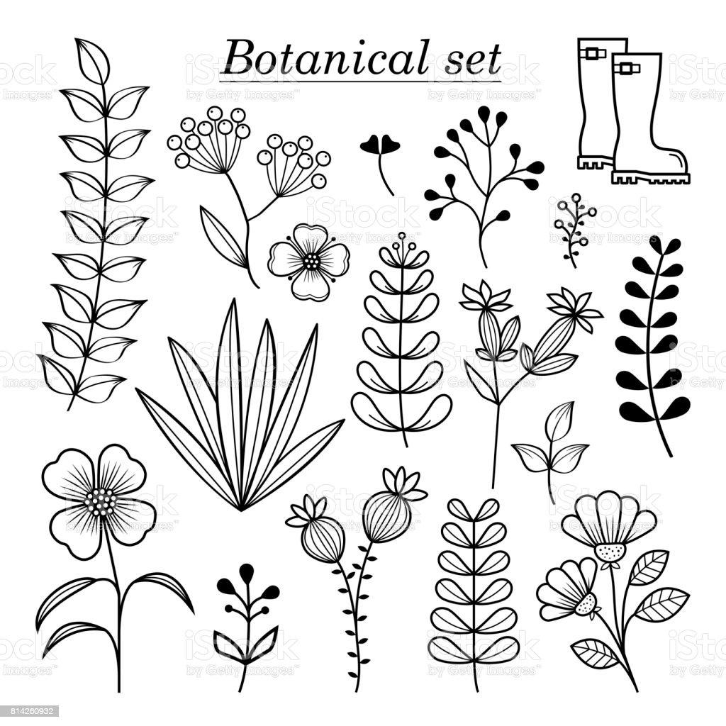 ボタニカル イラスト手描きの野生の花およびハーブ コレクション ベクター植物デザイン要素 アイコンのベクターアート素材や画像を多数ご用意 Istock