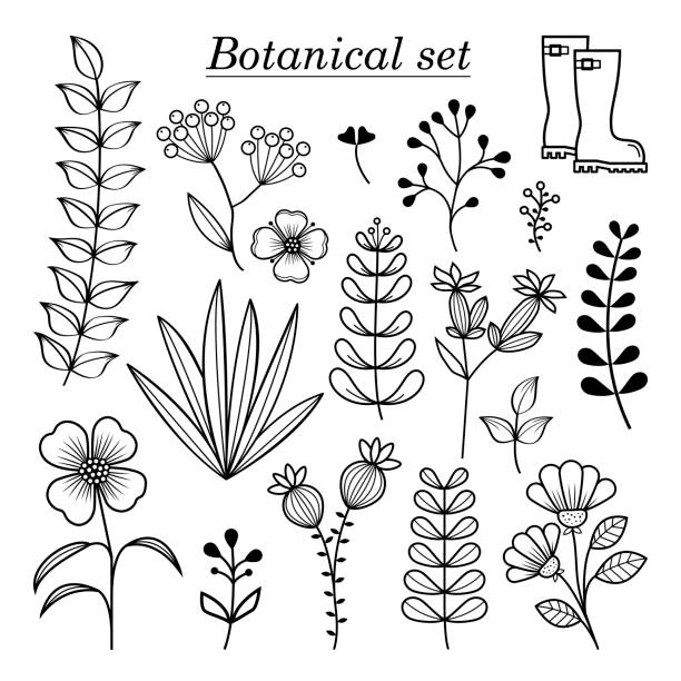 botanical illustration, hand drawn wild flowers and herbs collection, vector botany design elements - wildflowers stock illustrations, clip art, cartoons, & icons