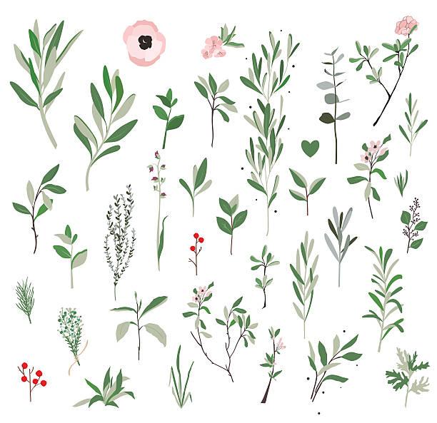 botanical illustration plants. - twig stock illustrations, clip art, cartoons, & icons