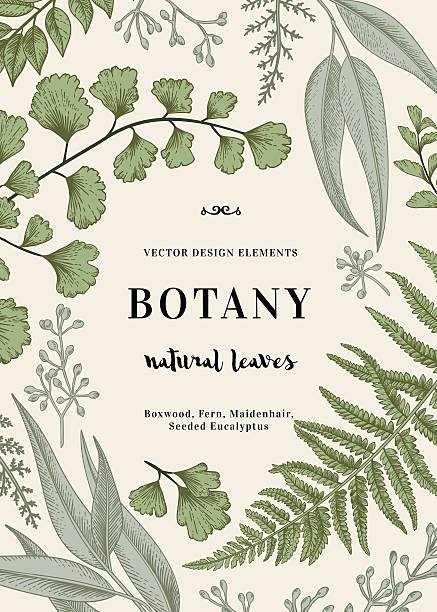 Botanical illustration with leaves. vector art illustration