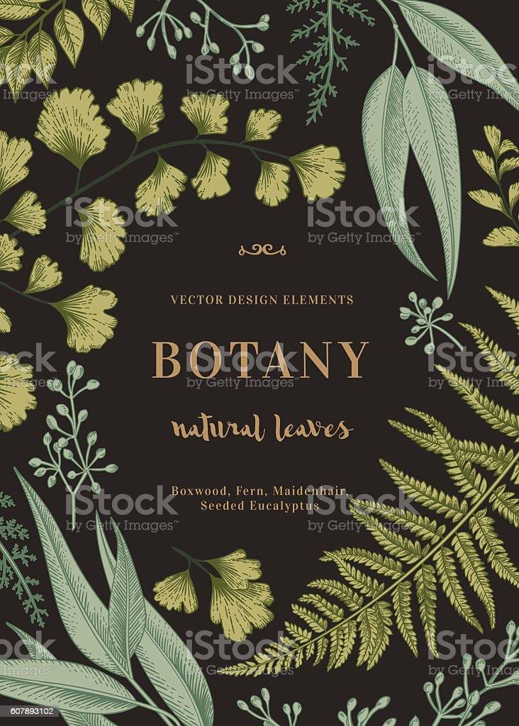 Botanical illustration with leaves.