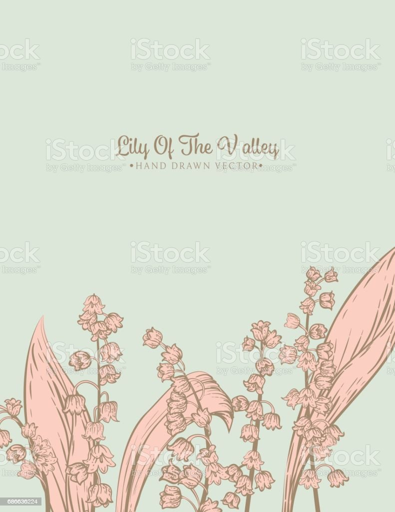 Botanical Lily Of The Valley Invitation Template 免版稅 botanical lily of the valley invitation template 向量插圖及更多 加拿大 圖片