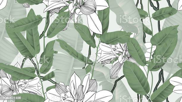 Botanical seamless pattern banana leaves vines and other leaves on vector id1080571456?b=1&k=6&m=1080571456&s=612x612&h=timp6ikqxyxpsdvgp0heytw23tcianoiatfo yzlbps=