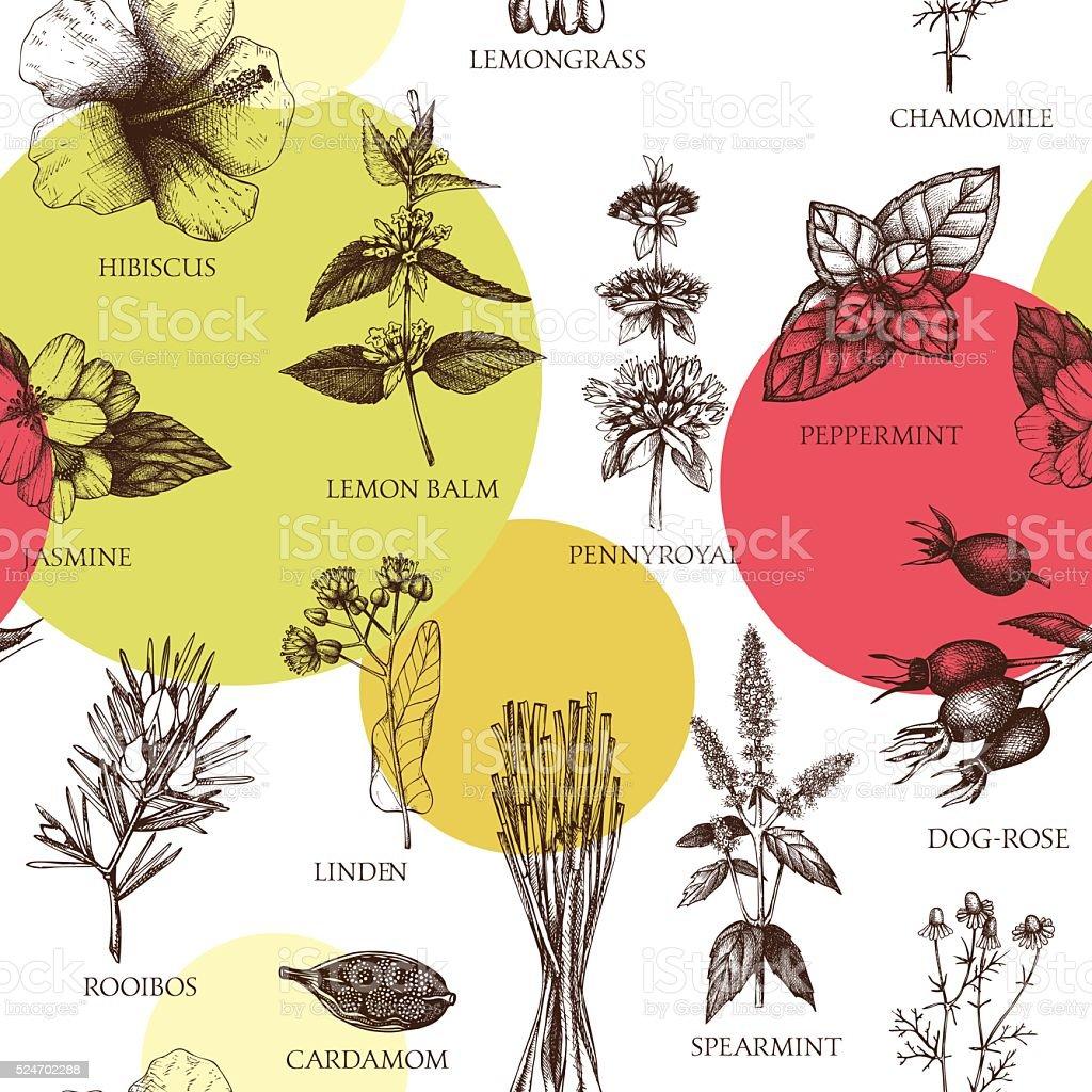 Botanical seamless pattern with hand drawn herbal tea ingredients. vector art illustration
