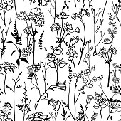 Botanical seamless pattern isolated on white. Meadow herbs, plants, flowers. Line outline graphic drawing. Elegant floral silhouettes. Herbarium style ornament.