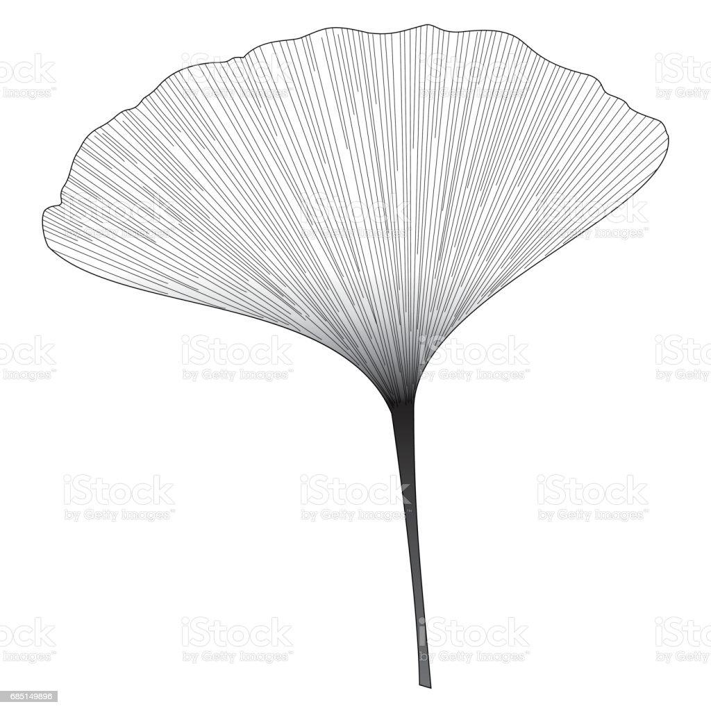 Botanical series Elegant Ginkgo leaf in sketch style in black and white on black background vector art illustration