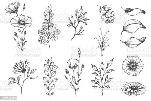 Botanical set of sketch flowers vector id859821388?b=1&k=6&m=859821388&s=612x612&h=wfu2pmulkzb hwg2pd0td b3sytigmpmgd6uf 1lrwi=