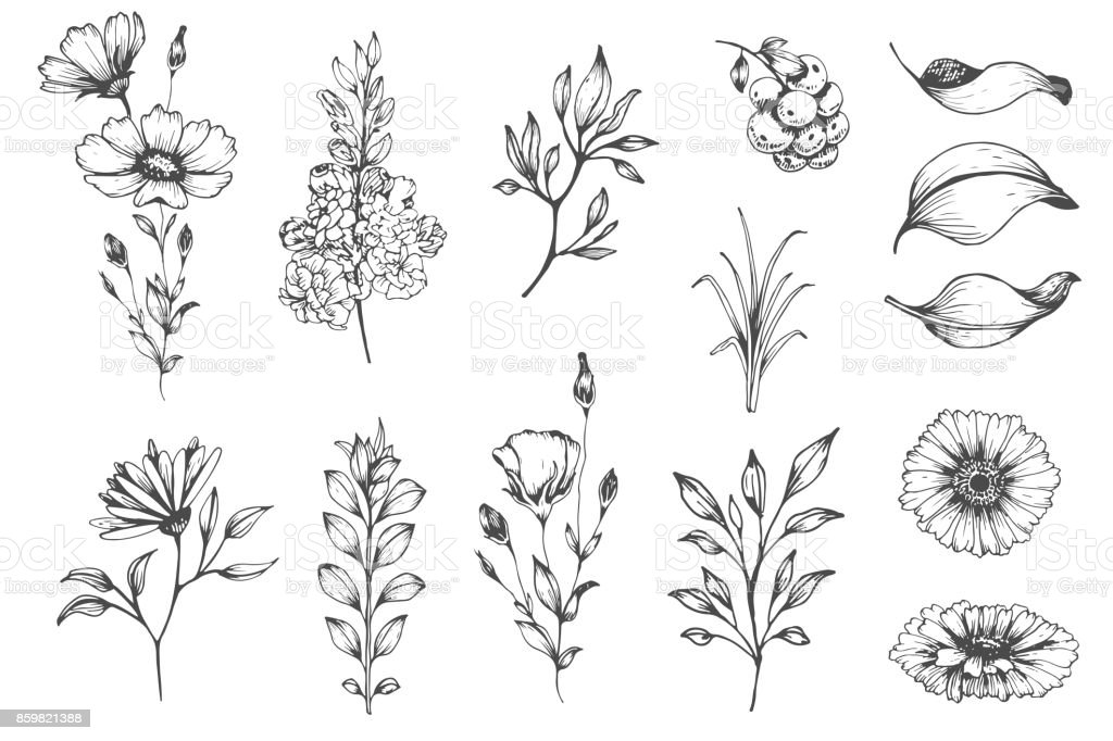 Botanical set of sketch flowers vector art illustration