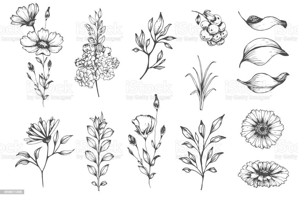 Botanische set schets bloemenvectorkunst illustratie