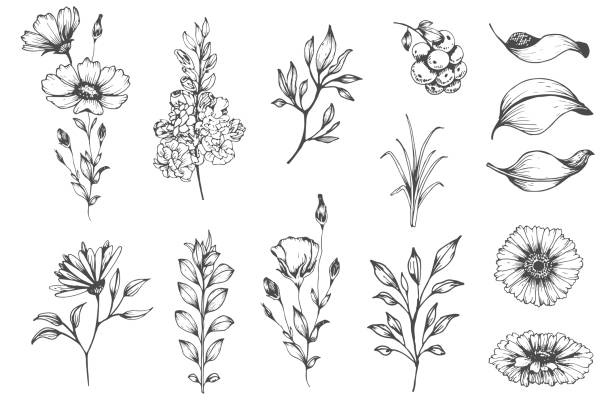 botanical set of sketch flowers - flowers stock illustrations, clip art, cartoons, & icons