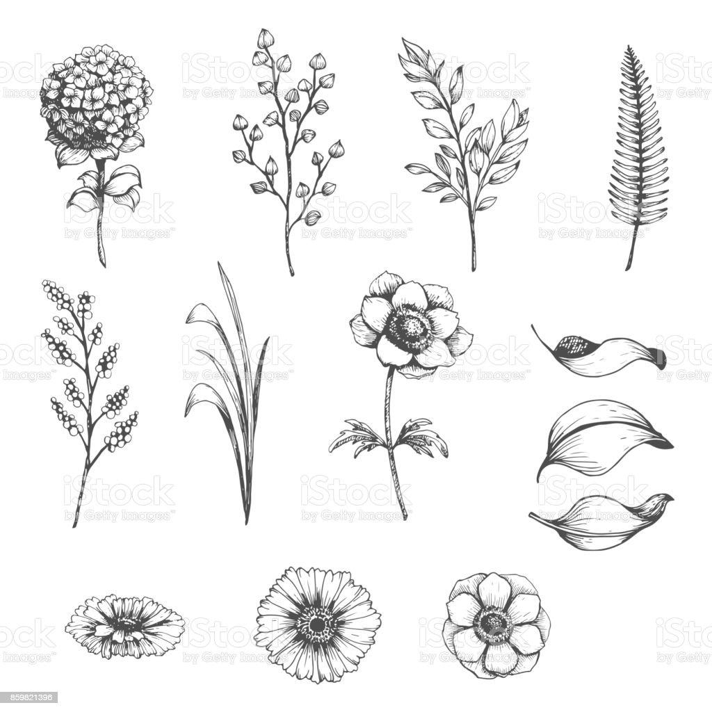 Botanical set of sketch flowers vector art illustration