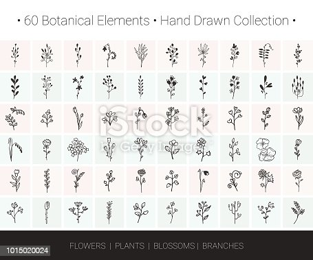 Botanical vector design elements. Branch, flower, herb, leaf, bud icons for floral wreaths, borders, logo designs, wedding invitation, greeting card, textile print. Hand drawn illustrations collection isolated on background.