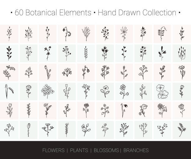 botanical vector set. branch, flower, herb, leaf, bud icons for floral wreaths, borders, logo designs, wedding invitation, greeting card, textile print. - wildflowers stock illustrations, clip art, cartoons, & icons
