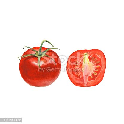Botanical watercolor vector illustration of whole and cut tomato on white background. Could be used as decoration for web design, polygraphy or textile