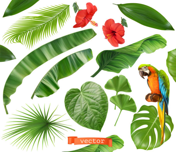 Botany. Set of leaves and flowers. Tropical plants. 3d realistic vector icons Botany. Set of leaves and flowers. Tropical plants. 3d realistic vector icons exotic animals stock illustrations