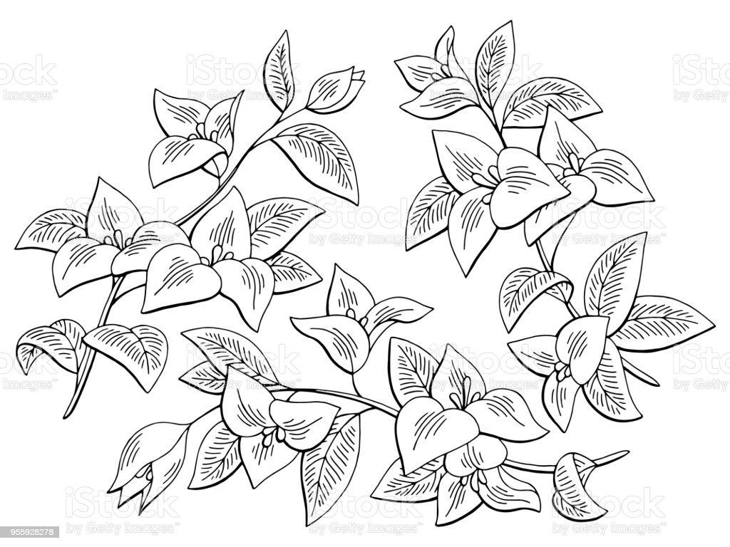 Vektör Bougainvillea çiçek grafik siyah beyaz izole kroki çizim ayarla vektör sanat illüstrasyonu