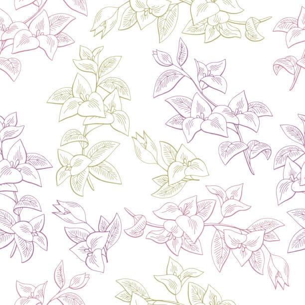 Buganvillas flores color gráfico transparente fondo de boceto vector ilustración - ilustración de arte vectorial