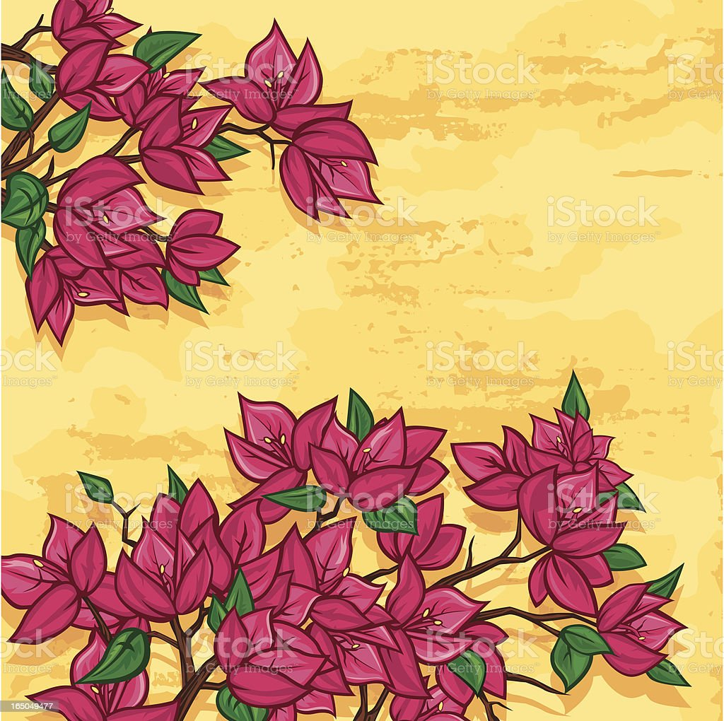 Bougainvillea Flowers vektör sanat illüstrasyonu