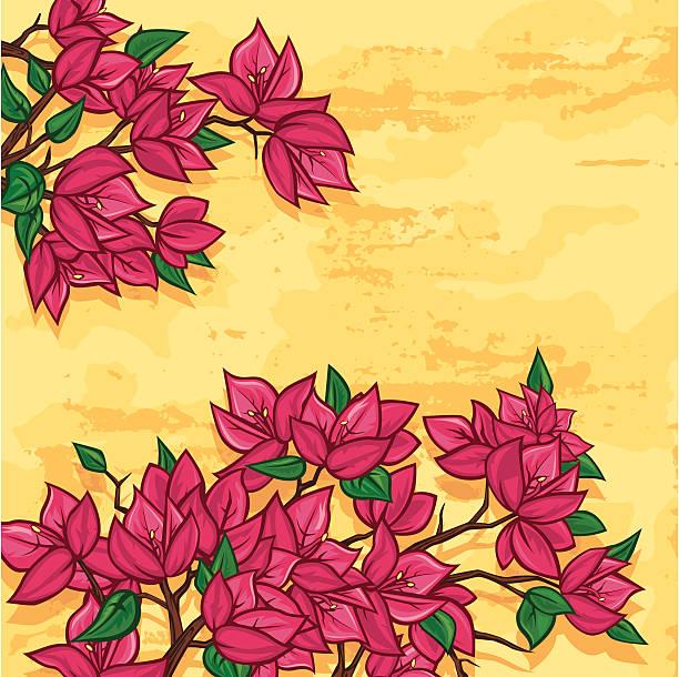 Buganvilia flores - ilustración de arte vectorial