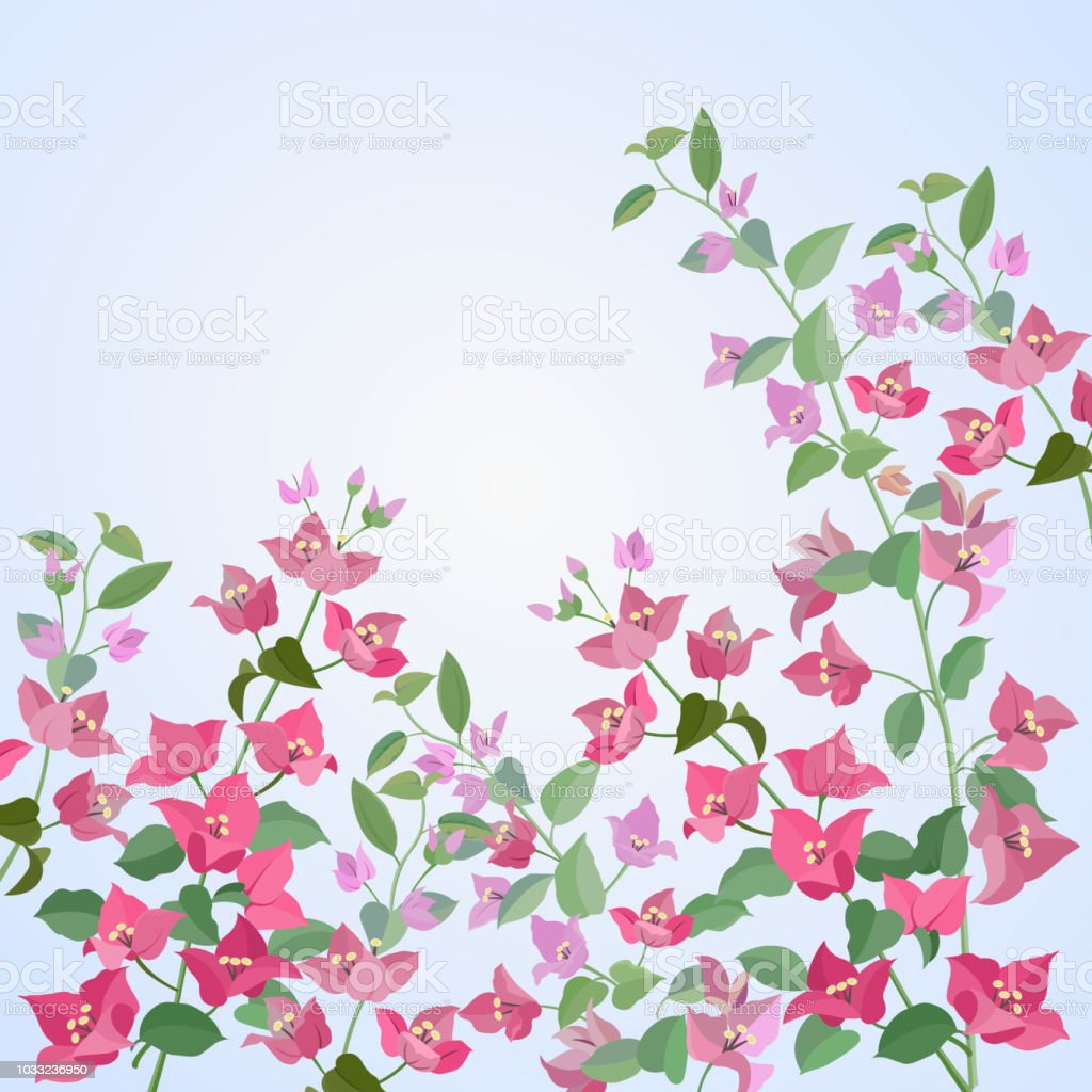 begonvillerin çiçekler vektör sanat illüstrasyonu
