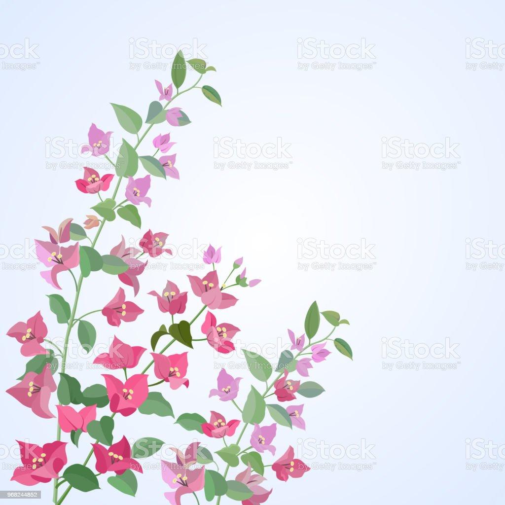 Begonvillerin çiçekler. vektör sanat illüstrasyonu