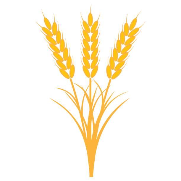 ilustraciones, imágenes clip art, dibujos animados e iconos de stock de ramo ramo de espigas de trigo con los tallos y las hojas de color amarillo maduro, vector el concepto de la cosecha de los cultivos, una gavilla de trigo maduro cebada o centeno - straw field