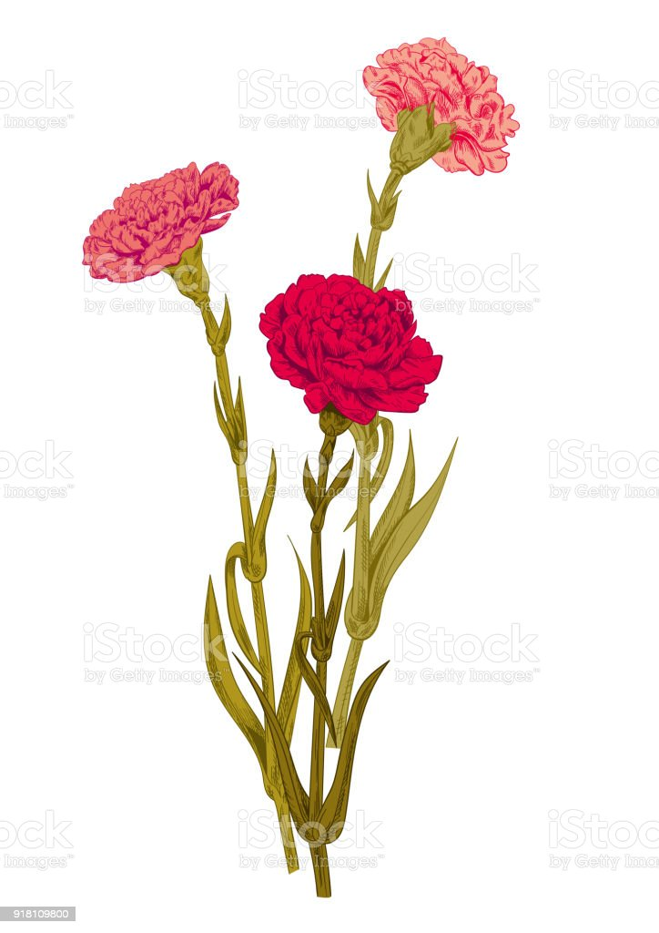 Bouquet carnation schabaud red pink yellow white flowers green stems bouquet carnation schabaud red pink yellow white flowers green stems mightylinksfo