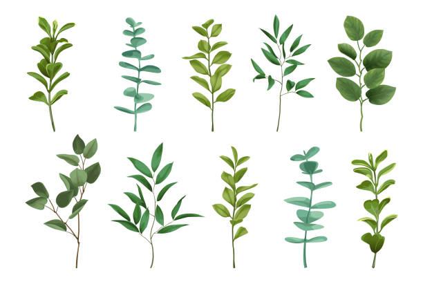bouquet grün set - kräutermischung stock-grafiken, -clipart, -cartoons und -symbole
