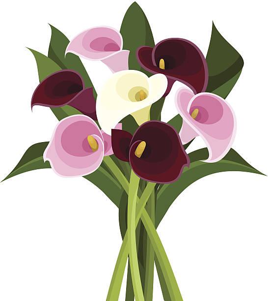 Bouquet de fleurs de lys (callas) retournées et coloré. illustration vectorielle. - Illustration vectorielle