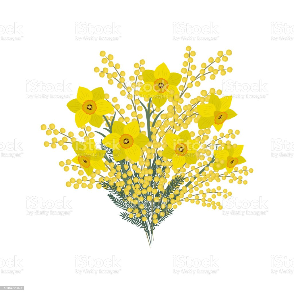 Bouquet Of Daffodills And Mimosa On A White Background Spring Yellow